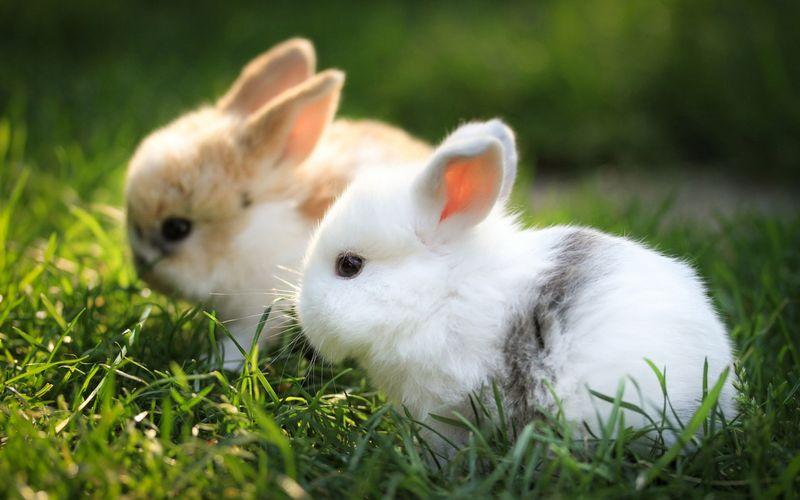 Bunnies-Lawn-White