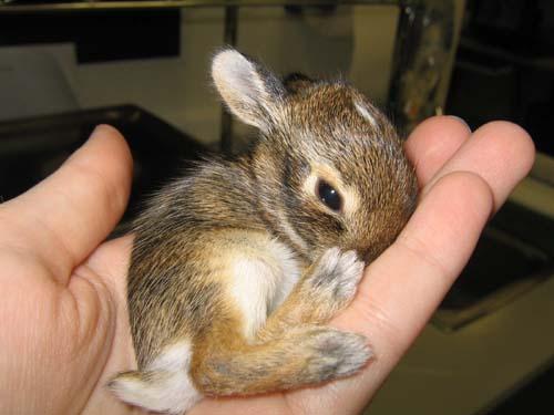 Cute-bunnies-4